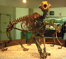 Prehistoric Lion Skeleton